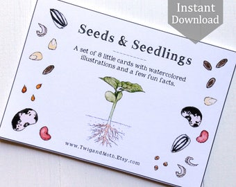 Seeds and Seedlings - Cards - Digital - Printable PDF, Montessori, Educational, Natural History, Botany, Plants, Nature Table