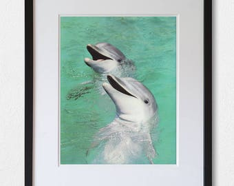 Dolphins - 60's vintage book photograph page