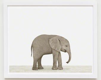 Baby Elephant Animal Nursery Art Print. Baby Elephant. Safari Animal Wall Art. Animal Nursery Decor. Baby Animal Photo.
