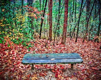 Sit in the Autumn Forest Fine Art Print - Nature, Botanical, Woods, Forest, Fall, Leaves, Nursery Decor, Home Decor, Baby, Zen, Gift