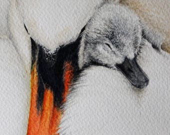 Swan and Cygnet original painting in watercolour (mum and child portrait)