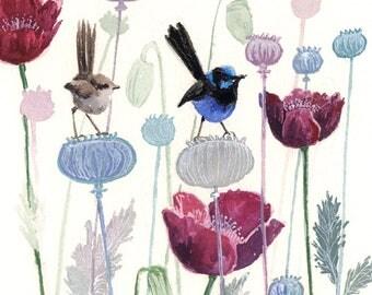 blue wren on poppy