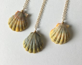 Sunrise Shell Necklace, FREE Shipping, Sunrise Shell Jewelry, Gold Fill, Hawaii Made, Hawaiian Jewelry, Simply Sparkle Designs (Nickel Size)