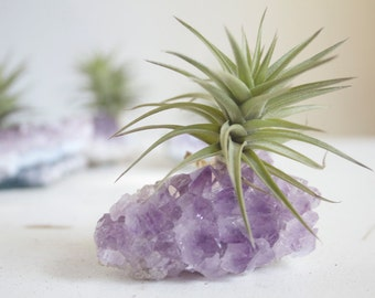 Amethyst Crystal Air Plant, Geode Planter, Crystal Garden For Her, Mom, Friend, Little Something Under 20, Spring Decor
