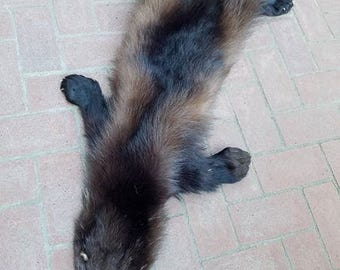 Real Beautiful Wolverine Life Size Pelt Fur