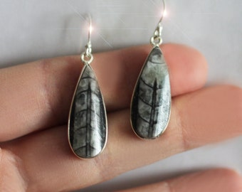 A Moment in Time - Beautiful Orthoceras Fossil Sterling Silver Earrings