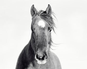 Horse Portrait in Black and White | White Background Animal Photograph | Horse Decor