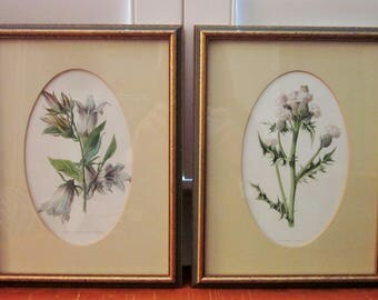 Antique Botanical Prints, Set of 2 Framed 8 x 10, Creeping Thistle and Nettle Leaved Bell Flower, 1880