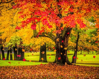 Autumn, City Park, Colorful Scene, Falling Leaves, in Grand Rapids, Michigan, No.49592, Fine Art, Fall Landscape, Photograph