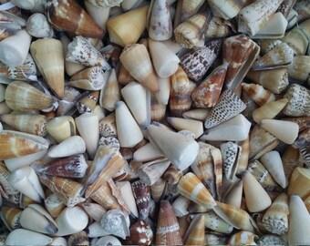 Overstock SALE Mixed Cone Shell Geometric Pattern Tan Spiral Top SeaShell, Arts Crafts Home Decor Craft Supplies Natural Ocean Beach Wedding