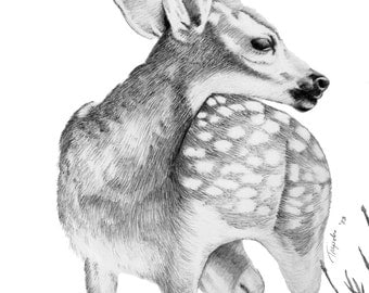 Fawn - 11 x 14 Matted Print