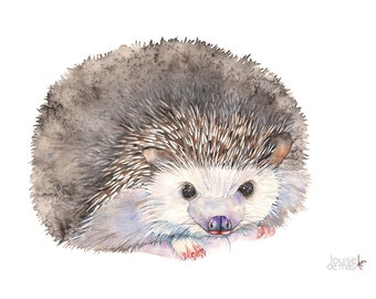 Hedgehog print of watercolour painting, H17417, 5 by 7 size print, Hedgehog watercolour painting print, Hedgehog watercolor painting print