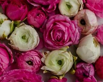 pink ranunculus, floral nursery art, romantic floral print, chic floral decor, girls room decor, pink and white decor, spring decor