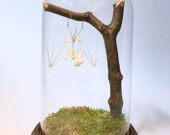 Articulated Bat Skeleton in Glass Dome cloche