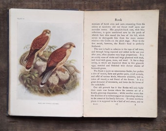 1920s bird book Bird Life of the Seasons by W. Percival Westell