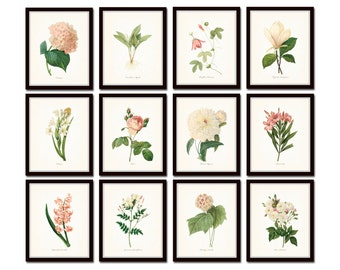 Pink and White Botanical Print Set No. 4 Redoute Botanical Prints Giclee Art Print Antique Botanicals Prints Posters Wall Art Print