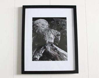 vintage black and white nature photography, artwork, wall art, vintage artwork, art, outdoor photography, photographs