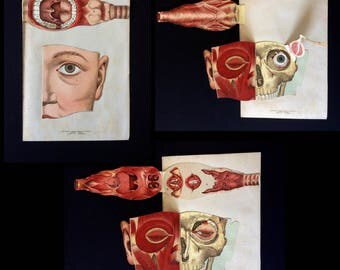 Vintage 1890s French Medical Anatomy Diagram Fold Out Chromolithograph Bookplate Face Mask MOUTH Throat Muscles Tendons Svankmajer Collage
