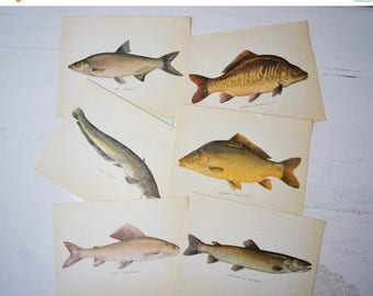SALE Vintage Lot of Danish Book Plates 1970s Fish Print