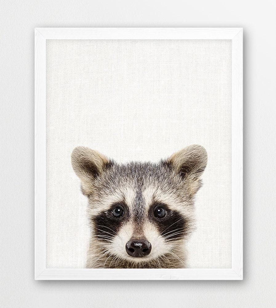 Raccoon Print Cute Baby Raccoon Photo Woodlands Animal