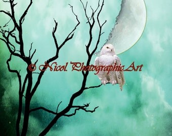 White Snowy Owl Bird Tree Moon Teal Clouds Home Decor Matted Picture A164