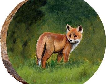 Startled baby Fox