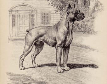 Vintage BOXER Print of a Boxer Illustration Black and White Gallery Wall Art Home Library Decor  Gift for Dog Lover 2878