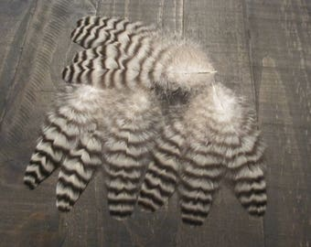 10 Black & Grey Rooster Tail Feathers ~ Cruelty Free