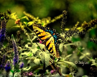 Butterfly, Butterfly Photography, Insect photography, Colorful art, Wall art, nature photography, Butterfly flowers, Home decor,10 x 15