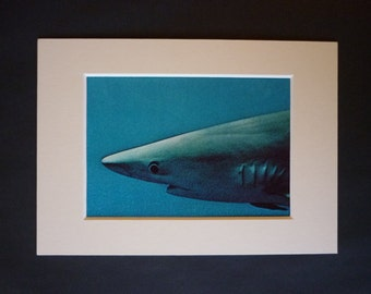 1970s Vintage Jacques Cousteau Print, Blue Shark decor, Diving Expedition, Available Framed, Diver Art, Marine Life Picture Aquatic Wall Art