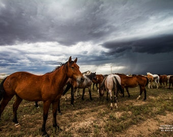 Horse Art Print, Animal Print, Equine Photo, Photography Horse Herd, Horses In Storm, Western Art, Herd of Horses, Horse in Storm, Horses