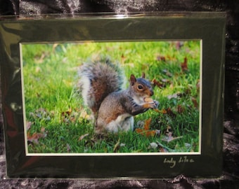 5x7 Matted Photo - Going Nuts