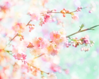 Nature Photography, Cherry Blossom, Spring, Tree, Flowers, Pink, Aqua, Wall Decor