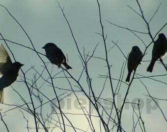 Springtime!  Sparrow of sparrow print 10 x 15 cm