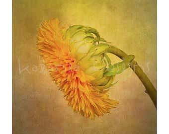 Sunflower Photographic print, sunflower photo print, flower photo print, fine art flower print, gift for gardener, wall art