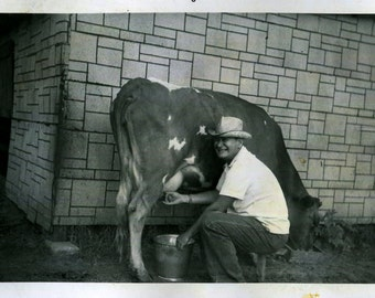Vintage Photos..Milking Time, 1950's Original Found Photo, Vernacular Photography