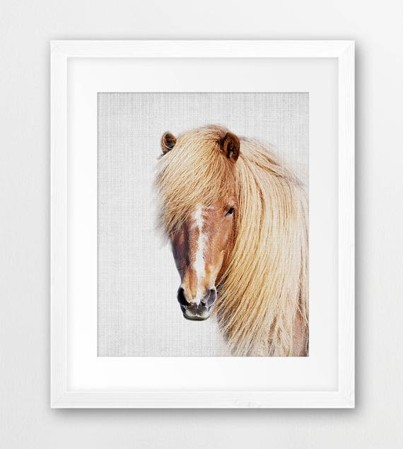 horse print color photography wilderness decor wild horses - Horse Pictures Print Color