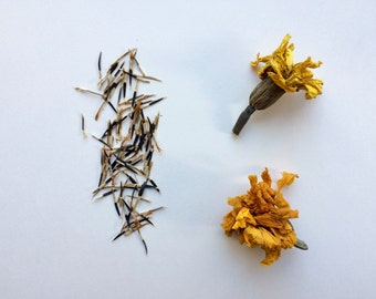 Heirloom French Marigold Seeds - A Natural Dye Plant