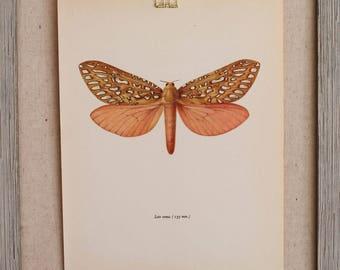 Vintage Butterfly Print circa 1965 by Prochazka, wall decor, Book Plate