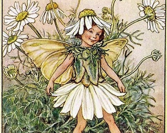 The Scentless Mayweed Fairy - Counted cross stitch pattern in PDF format