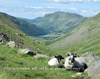 Lake District Photography - print at home quick gift sheep and mountain
