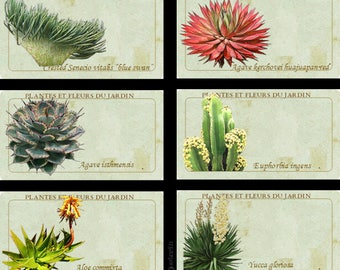 Botanical Labels