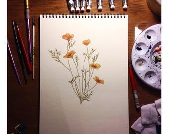 California Poppies - (Prints)