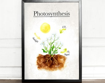 Photosynthesis, giclee art print, watercolor, biology, science, geek, educational print, wall decor