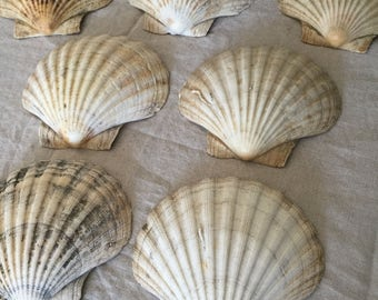 Set of Vintage Shells