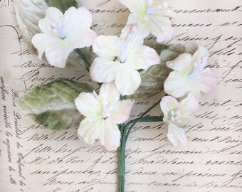 primrose posy. velvet primrose flower posy. cream , pink, burgundy primroses.