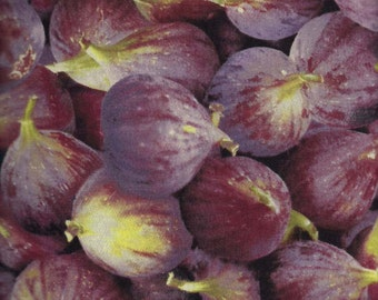 Farmer's Market purple onion fabric by RJR