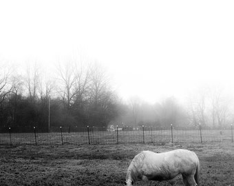 foggy day in the country, horse, rain, black and white, fine art print, canvas