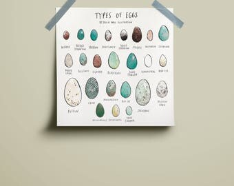 Types of Eggs Print