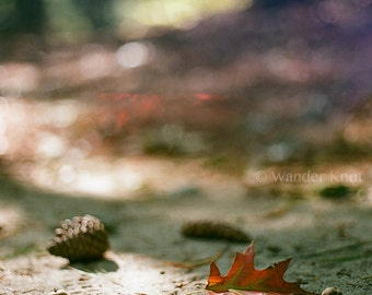 Autumn in New York - Nature Photography Prints - Matted